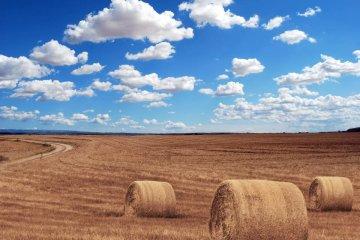 В Україні дозволили купувати землю: що передбачає ухвалений закон