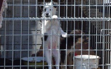 Чи зменшилась кількість безпритульних тварин в Краматорську
