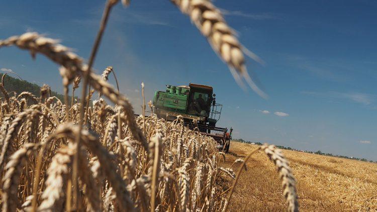Чому не працює «хлібне перемир'я» у зоні АТО
