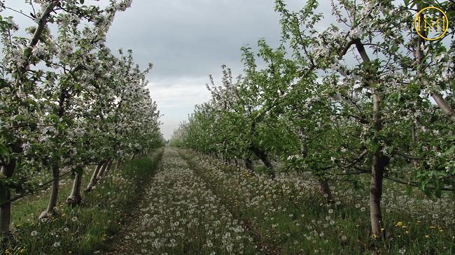 Яблуками з Донеччини смакують у Дубаї - Фото №1