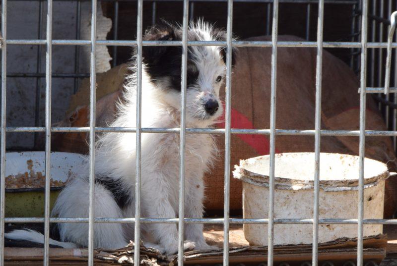 БФ «Друг»: наша мета допомогти тваринам і показати людям, що потрібно змінюватися