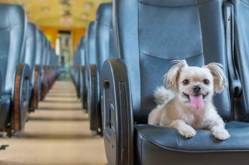Як правильно подорожувати з домашніми тваринами