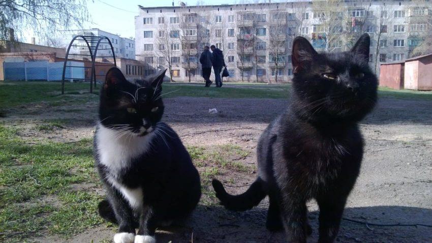 Утримування домашніх тварин: які існують правила і відповідальність
