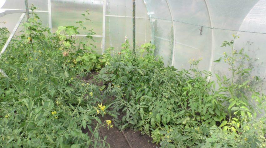 Фермери зі школи: учні Новомиколаївської школи власноруч вирощують овочі та зелень