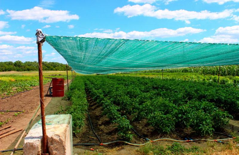 Як створити сільськогосподарський кооператив