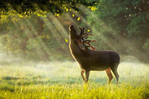 Браконьєрство: його види та відповідальність