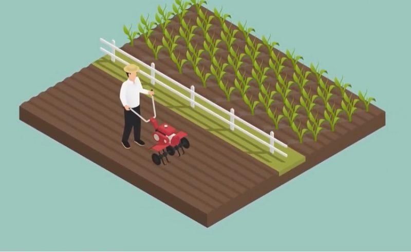 Як безкоштовно отримати у власність земельну ділянку: покрокова інструкція