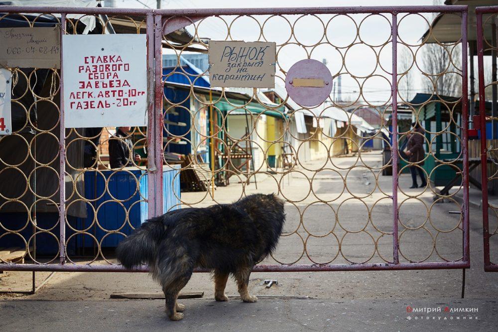 Як карантин змусив ринки Краматорська перейти в онлайн - Фото №1